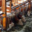 Hale namiotowe: nowoczesne rozwiązania dla rolnictwa